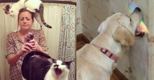 10+ Tweets That Literally Prove Dogs Are The Angels And Cats Are Devils