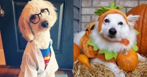 10+ Dogs Who Are Absolutely Ready For Halloween