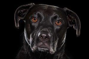 15 Dark Doggos That Will Melt Your Heart