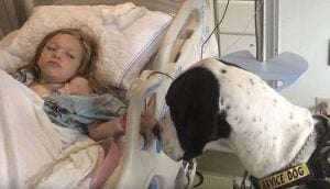 The Heartwarming Tale of a Little Girl and Her Service Dog That Will Move You to Tears