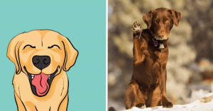 10 Gestures Your Dog Employs to Communicate its Thoughts to You