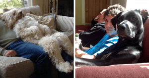 We Just Can't Get Enough Of These Dogs That Are Acting Like Humans