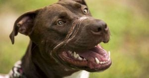 Caitlyn The Dog Finally Gets Justice: Abuser Appeared Before A Parole Board To Judge His Fate