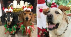 An Awesome Insta Compilation of the Happiest Christmas Doggos Enjoying Festivities