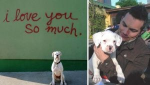 Man Pens Tearjerking Farewell To His Beloved Dog, From The Dog's Perspective