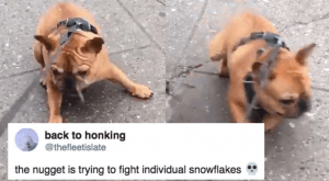 10+ Tweets That Prove Dogs Are Both Intelligent And Dumb At The Same Time