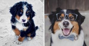 We've Got Instagram's Cutest Puppers Ever Right When You Need It