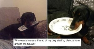 This Doggo Thief Has Stolen Our Hearts Away with His Petty Theft Crimes