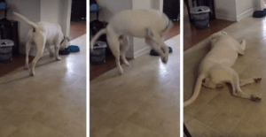 Pupper Throws Hilarious Tantrum When He Saw His Dinner Is Missing His Favorite Ingredient