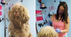 Rescued Dog Gets a Midnight Haircut and Stuns Everyone With His Underlying Beauty