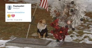 This Pupper Refuses to Leave Her Mom's Grave in a Tragic Display of Loyalty and Love