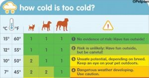 This Chart Tells You When It's Too Cold To Walk Your Dog; Thank Us Later