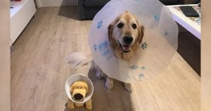 Stuck in the cone of shame, this dog got the best present ever!