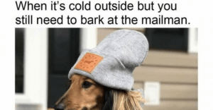 10+ Funny AF Memes Depicting the Relationship Between Doggos and The Mailman