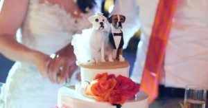 Couple Wanted To Include Their Doggo In Their Wedding So They Came Up With A Pawsome Idea