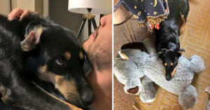 Cute Doggo Pretends To Be Sick So His Human Will Stay Home From Work
