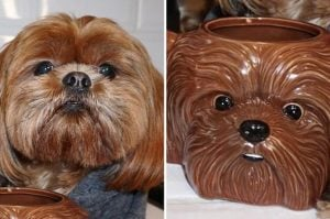 I Can't Handle How Cool Ellen Degeneres's Dog is with it's Matching Mug