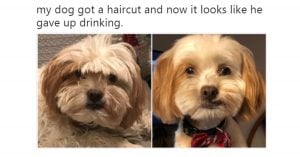 10+ Hilarious Posts Any Small Doggo Owner Can't Resist Laughing At