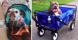 18 Must-Have Accessories to For Your Senior Doggo