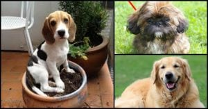 Looking for a Pup? Here are 8 Dog Breeds That Will Spoil You With Their Puppiness For the Longest Time!