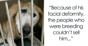 This Dog Was Abandoned For Being 'Ugly' But Now Finds A New And Loving Home