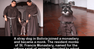 This Pup Became A Monk And The Story Behind It Is Heartwarming