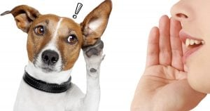 Recent Study Indicates That Dogs Can Actually Understand What You're Saying