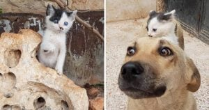 Orphan Kitty Finds Dog Who Lost Her Pups And They're The Cutest Adoptive Pair Ever