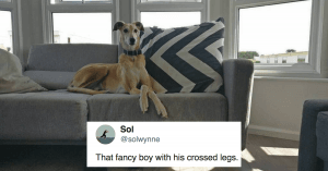 10+ Very Good Doggos That Are Too Classy To Handle For You