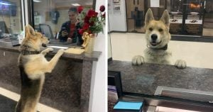 Dog Finds His Way Into A Police Station And Reports Himself Missing